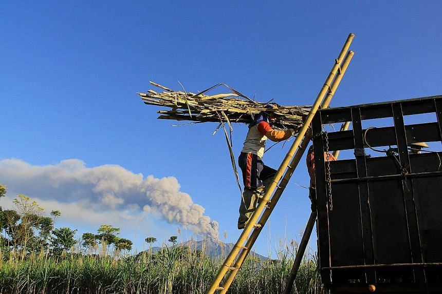 Above: Workers harvesting sugar cane in a village in Java on July 25 while Mount Raung volcano emitted steam and ash. Left: Passengers waiting for flight information yesterday at Bali's airport.