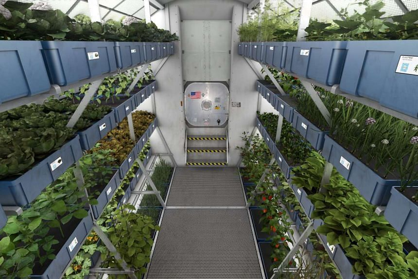 An artist's impression of a hydroponic cultivation area.