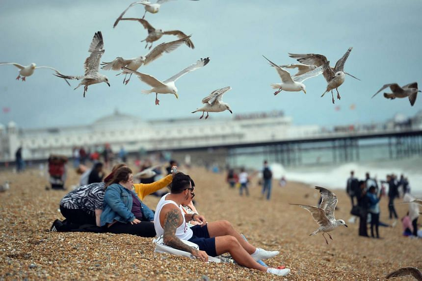 Seagulls try to steal food from a couple as they eat lunch on Brighton seafront in southern England last week.
