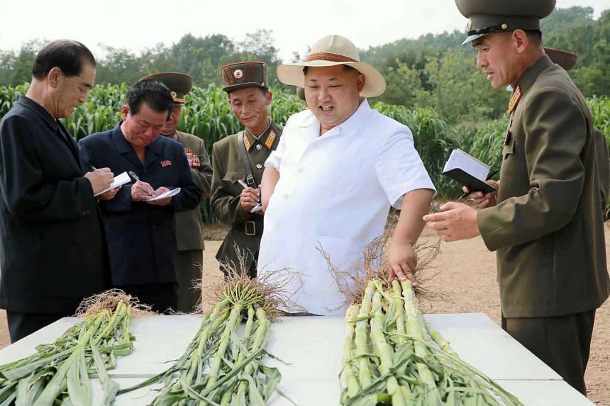 An undated picture released Aug 13, 2015, shows North Korean leader Kim Jong-Un (centre) on a farm inspection.