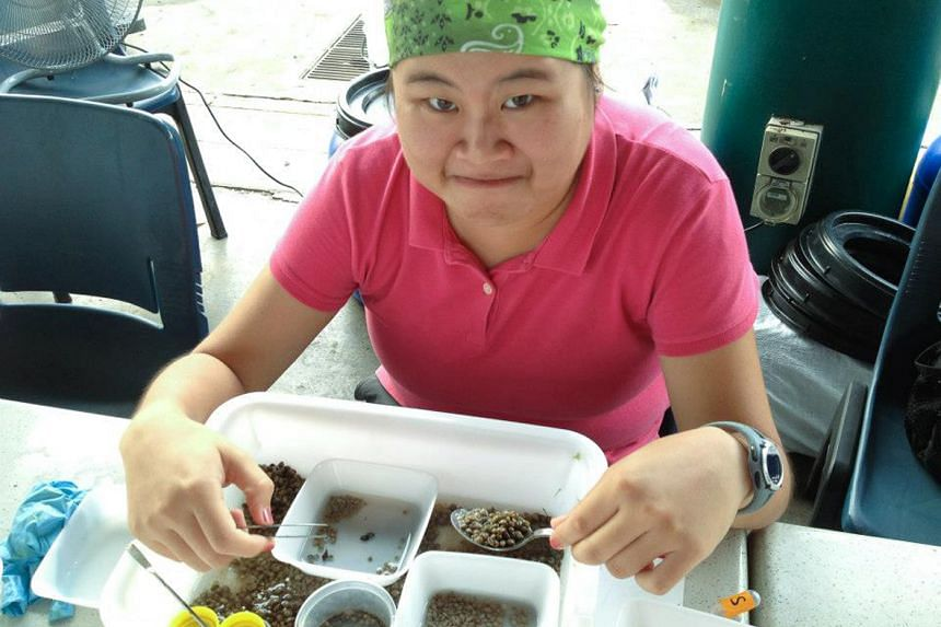 Teacher Heng Pei Yan, 29, sorting through samples collected during an expedition to survey Singapore's shores.