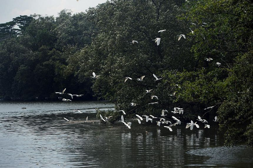 The Sungei Buloh Wetland Reserve.
