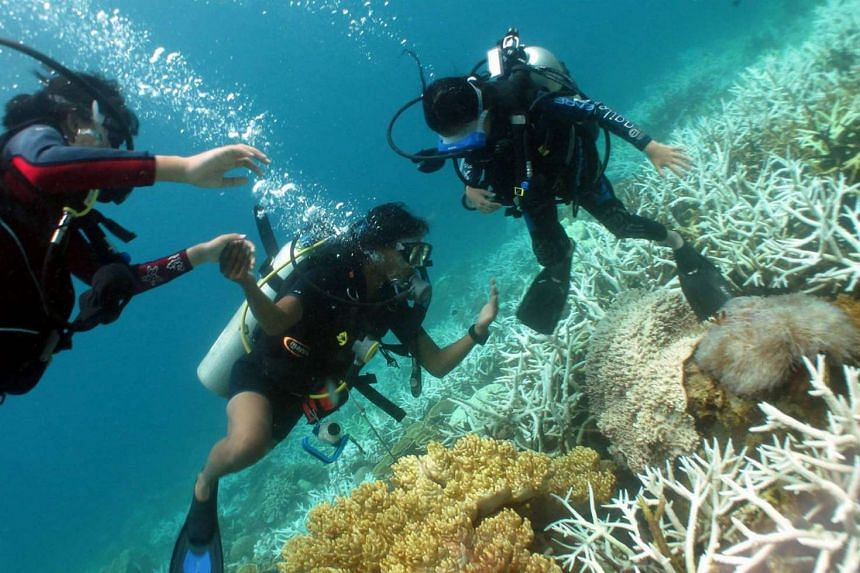 The group had headed out to Sangalaki island, a popular dive spot.