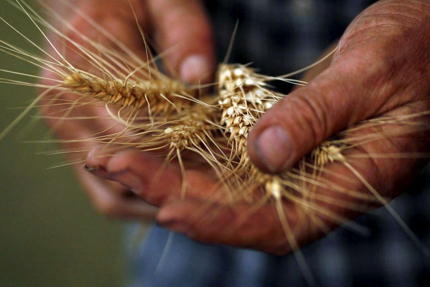 Australian wheat producers are losing market share in Indonesia, its single largest customer and the world's second-biggest wheat importer.