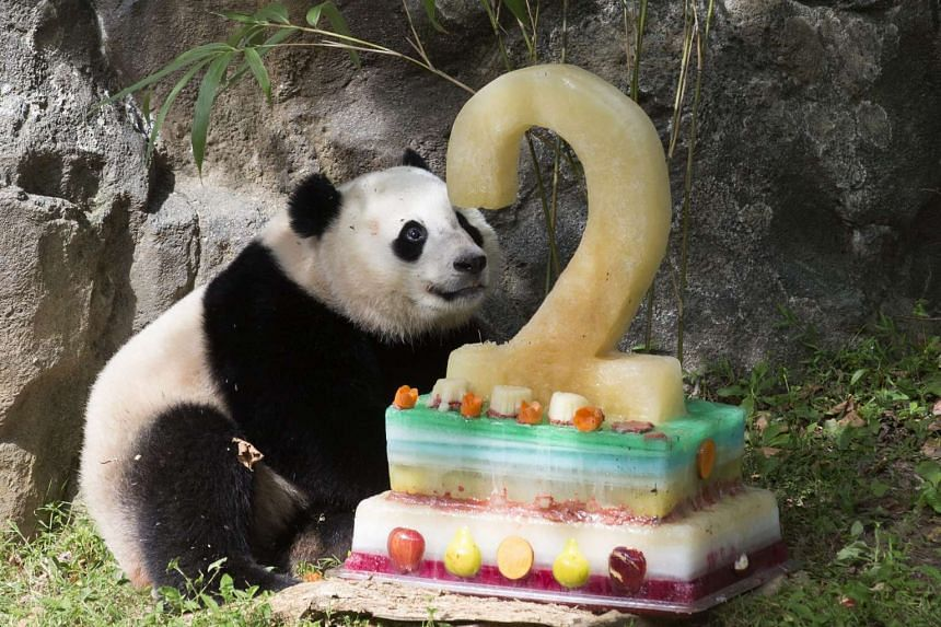 Giant panda cub Bao Bao is given a cake to enjoy on her second birthday, at Smithsonian's National Zoological Park, in Washington, DC on Sunday. Bao Bao's second birthday comes a day after her mother, 17-year-old Mei Xiang, gave birth to twins.