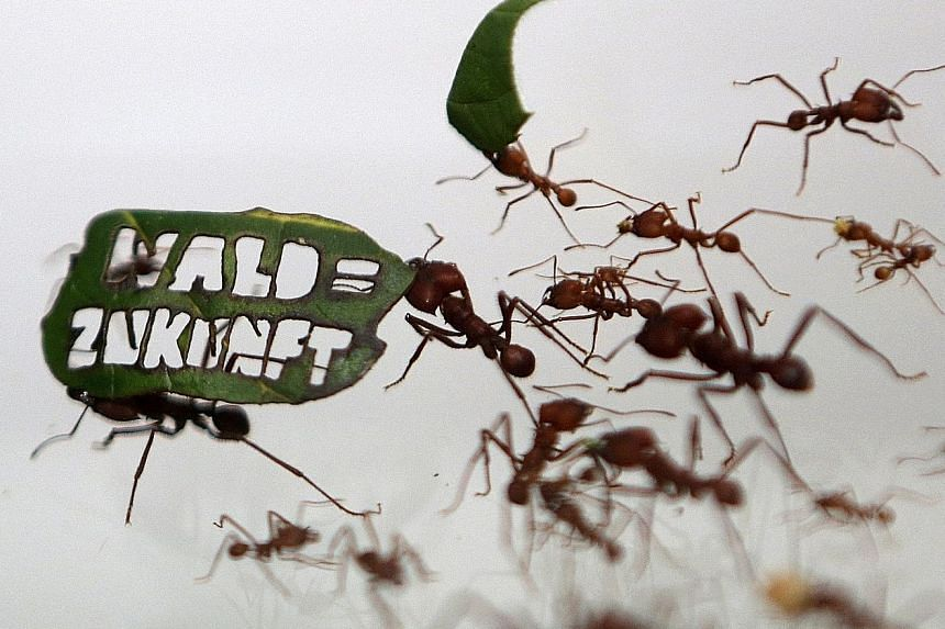 """Ants with a leaf that reads """"Forest = Future"""" at a zoo in Germany on Aug 18. Forests are vital as they take carbon dioxide out of the atmosphere."""