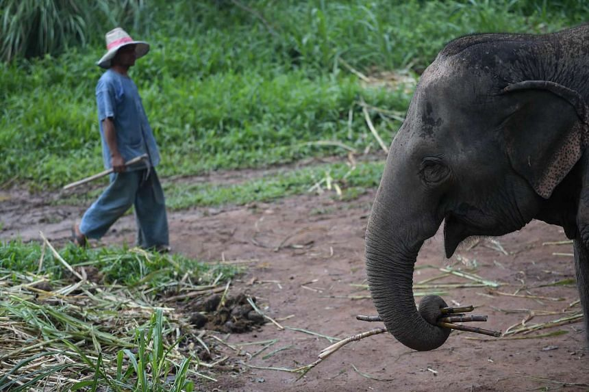 Police said the incident took place as a Chinese family of three took a ride on the back of a male elephant.