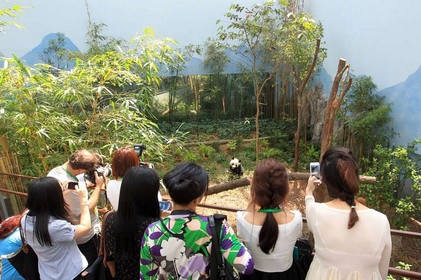 Visitors looking at one of the giant pandas at the Giant Panda Forest on Nov 28, 2012.