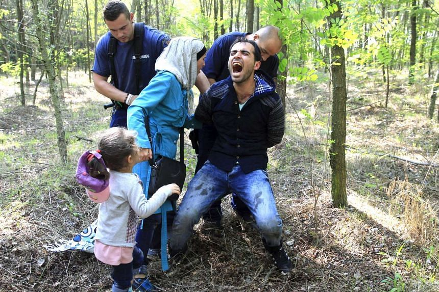 Hungarian policemen arrest a Syrian migrant family after they entered Hungary at the border with Serbia, near Roszke.