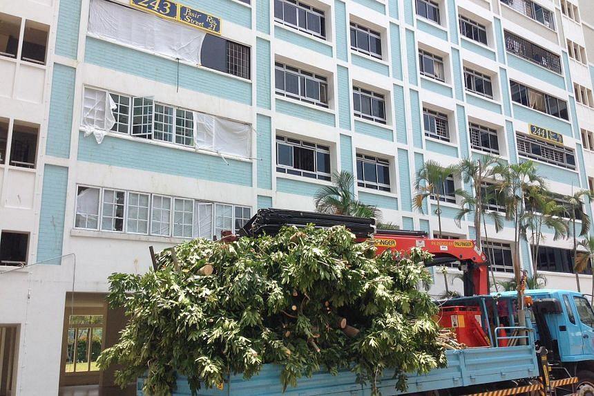 The tree has been chopped up and placed on the side. Workers hired by town council were seen clearing the debris of leaves and branches on Aug 31, 2015. Among the debris were glass shards from the flat windows above.