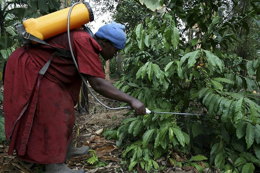 Some of the occupations that are likely to be hit by climate change - for better or worse - are (from left) coffee-farming, fishing and wine-growing. The reality of global warming is starting to hit home hard, as the world could get warmer by 2 deg C