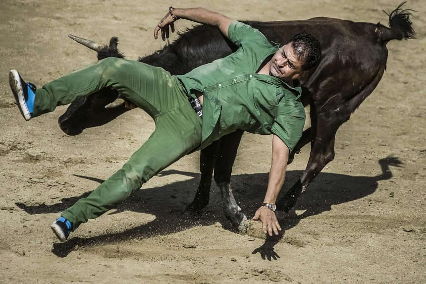 A 'mozo' or bull-runner is gored during the sixth and last bull run of this year at San Sebastian de los Reyes in Madrid, Spain on Sunday. Five people of over 3,500 participants were slightly injured during the first minute and 54 seconds bullrun.