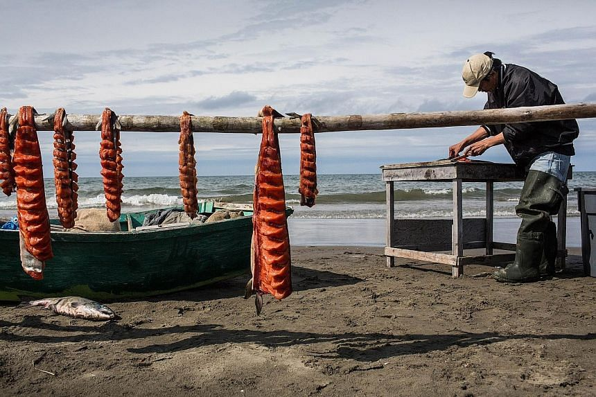 An Arctic fisherman in the Chukchi Sea area preparing his freshly caught salmon. The warming seas of the region present a chance for trade to many countries but threaten the livelihoods of Arctic inhabitants.