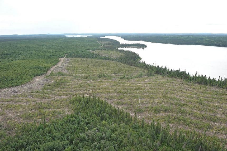A cleared part of a forested area in Quebec, Canada. Halting deforestation is a key focus of UN negotiations for a global pact to limit disastrous climate change caused by greenhouse gas emissions.