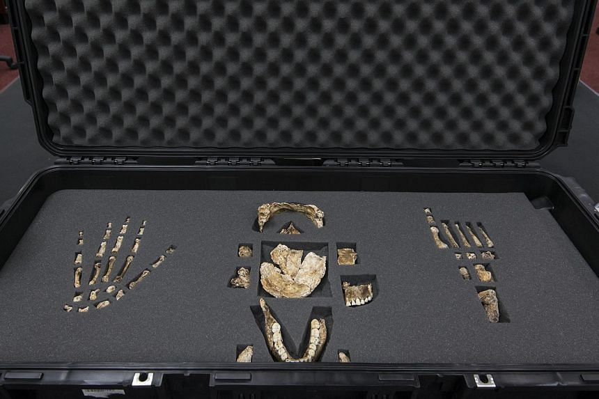 Parts of the skeleton belonging to the Homo Naledi displayed during a media preview by the University of the Witwatersrand on Sept 7, 2015, in Johannesburg.