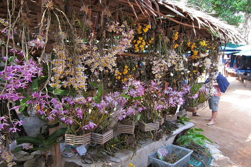 A stall selling wild orchids at a market on the border between Thailand and Myanmar. Following surveys of four of Thailand's largest markets, scientists from NUS found over 300 species of wild orchids traded illegally in the region. Tens of thousands