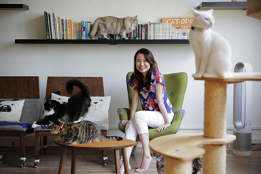 Ms Tan Sue Lynn, owner of Cat Cafe Neko no Niwa, hopes the 99%SME campaign will let her reach more people and help them understand and experience how affectionate and beautiful community (stray) cats can be. Firms can publicise their business and pos