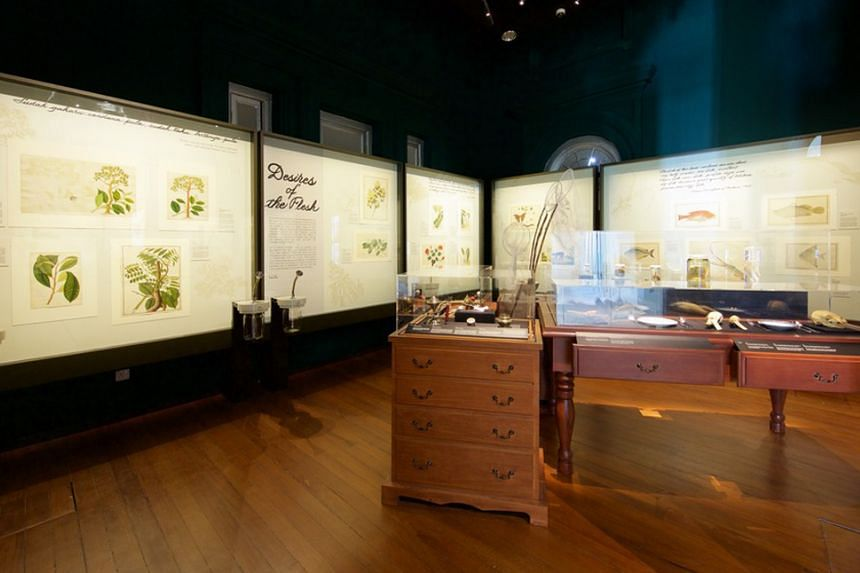 The Goh Seng Choo Gallery hosts the William Farquhar Collection Of Natural History Drawings, as well as specimens borrowed from the Lee Kong Chian Museum of Natural History.