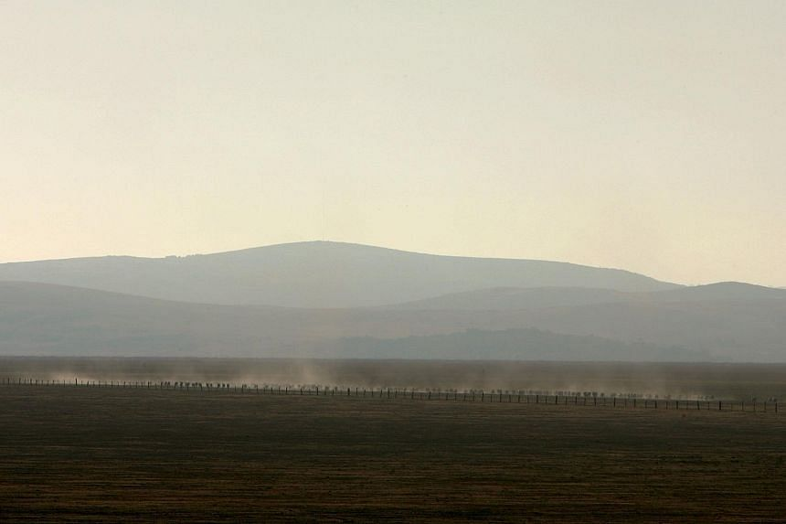 Sheep stir up dust as they move across the dried-up water basin known as Lake George, north-east of Canberra.