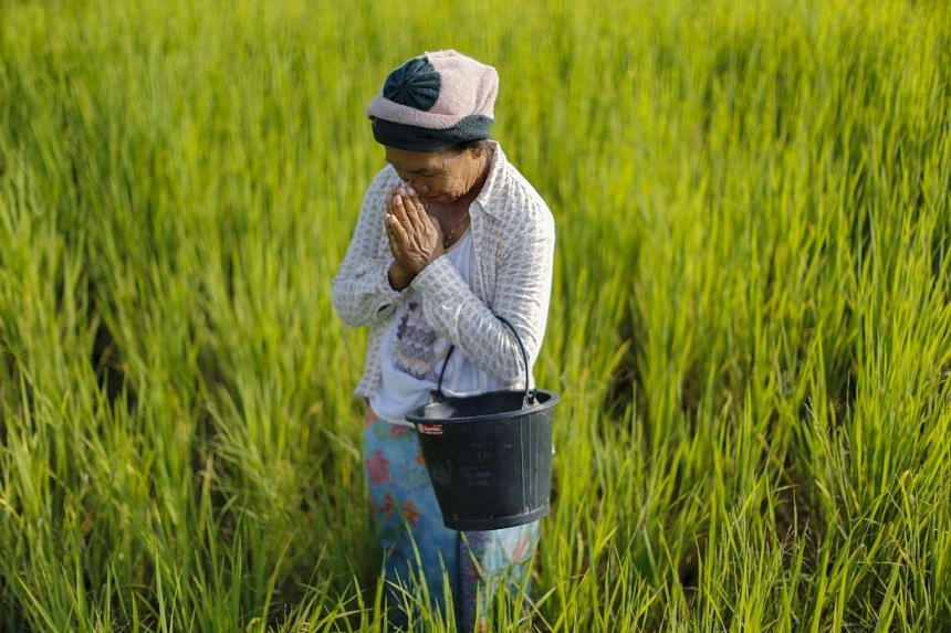 """Rice farmer Boonhome Suaydee, 57, praying in Khon Kaen, Thailand, on Sept 14, 2015. From self-imposed exile, the influential leader of Thailand's rural """"red shirt"""" opposition movement, former Prime Minister Thaksin Shinawatra, has delivered a simple"""