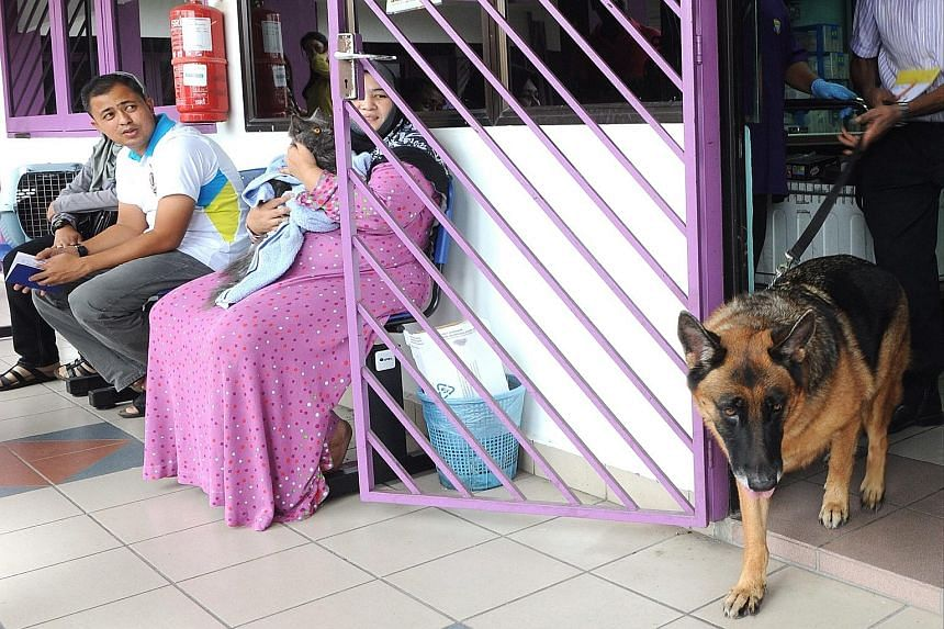 A dog leaving the Penang Veterinary Department in Butterworth, Penang, after receiving an anti-rabies jab. There have been more than 20 cases of rabies in humans reported in Penang, Kedah and Perlis.