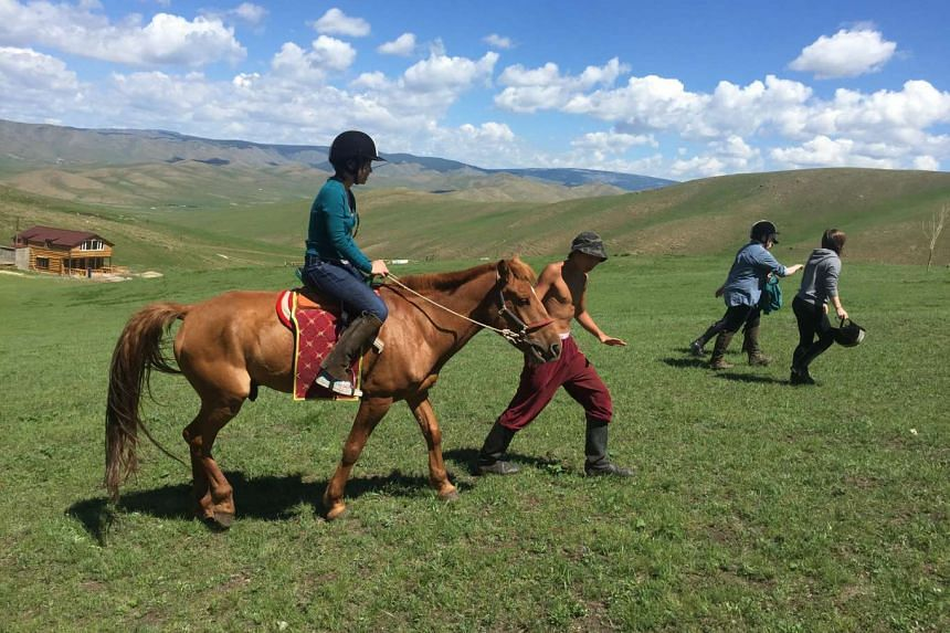 Mongolian horses live in the open and are free to roam when they are not rounded up for rides.