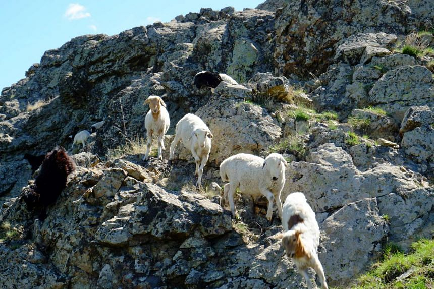 Animals such as goats roam the craggy slopes in Mongolia (above), and a tourist attraction near Ulan Bator – the 40m-tall Genghis Khan Equestrian Statue.