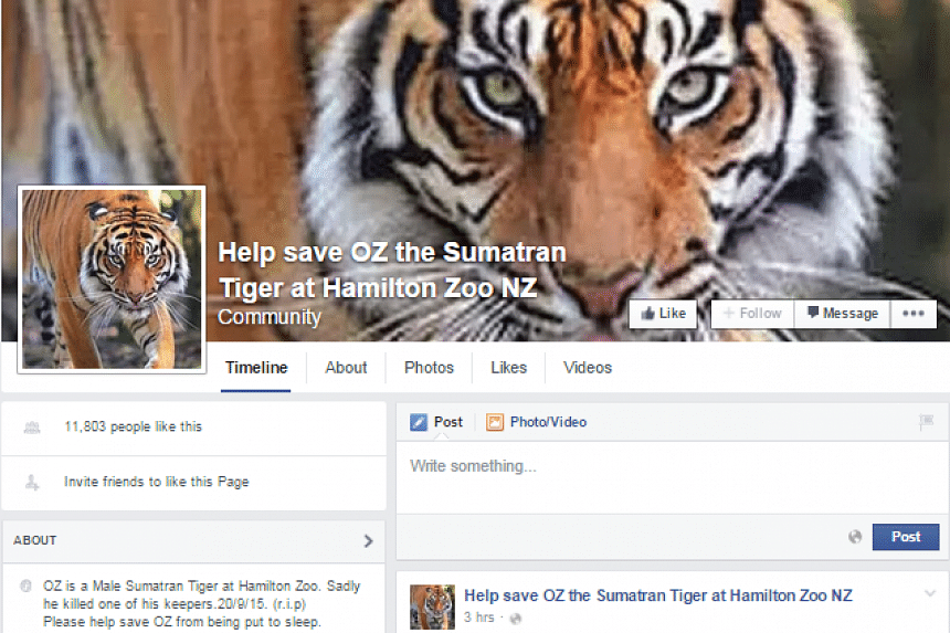 The zoo's decision not to put Oz the tiger down comes after an online petition opposing euthanasia attracted more than 5,000 signatures and a separate Help Save Oz Facebook page gained more than 10,000 likes.
