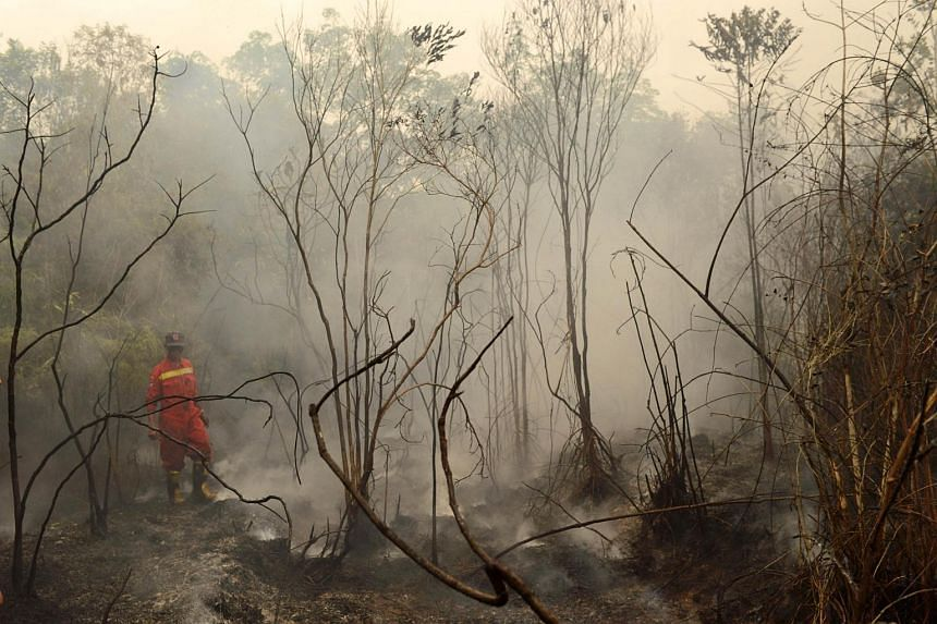 An Indonesian firefighter surveys burning peat land in in the Kapuas district in Central Kalimantan province.