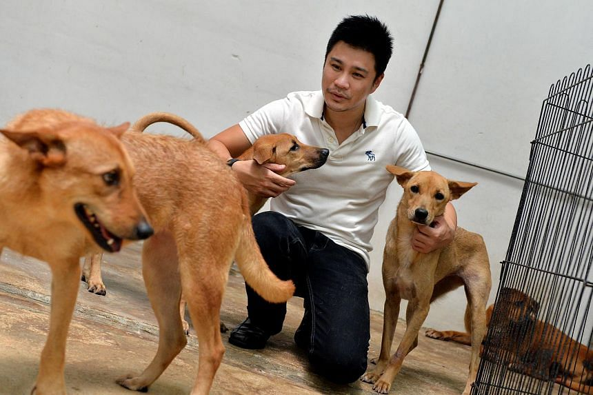 Dr Siew Tuck Wah, president of animal welfare group, Save Our Street Dogs (SOSD), with some of the rescued strays at the Pasir Ris shelter.