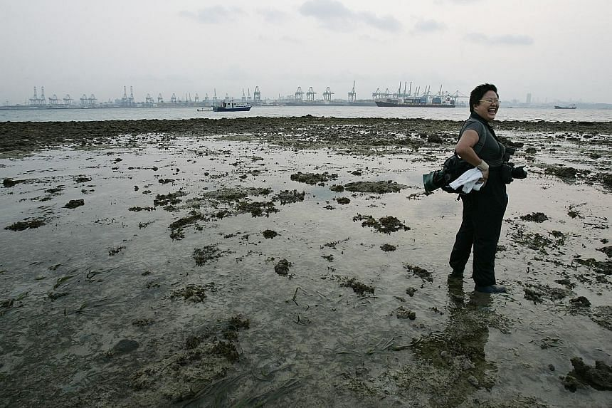 The writer, Ms Ria Tan, is the founder of www.wildsingapore.com. During her rounds of coastal areas in Singapore, she has seen mangrove trees, seagrasses and marine life sprout up on their own on man-made structures.