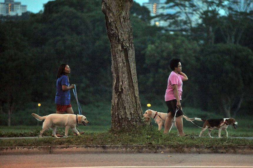 Maids walking dogs along Holland Road.