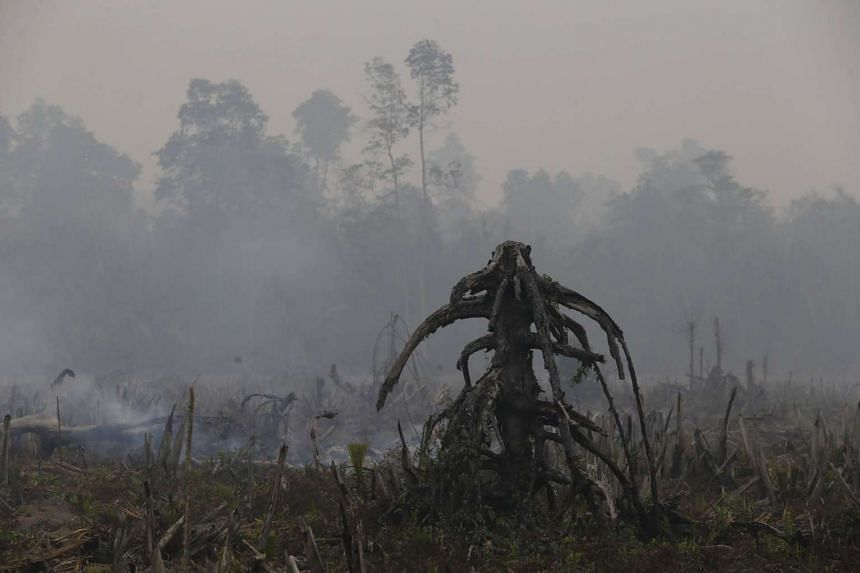 The root of a tree is seen in a burnt palm plantation area near Tanjung Siapi Api port in Palembang, on the Indonesian island of Sumatra.