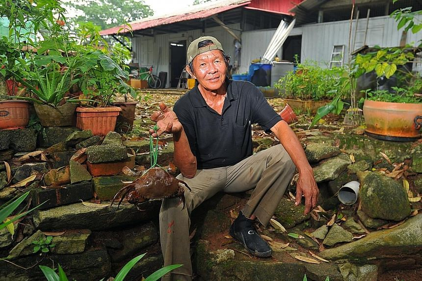 Pulau Ubin crab seller Quek Kim Kiang, 63, who uses a traditional hooking technique to catch the crustaceans, hopes to pass on his skills. Mr Quek's daily routine was uncovered by anthropologist Vivienne Wee, who is leading a five-member research tea