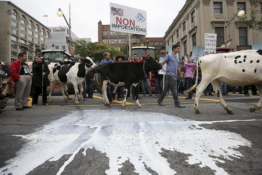 Canadian dairy farmers walking their cows past milk splashed on the street during a protest against the Trans-Pacific Partnership trade deal in front of Parliament Hill in Ottawa this week.