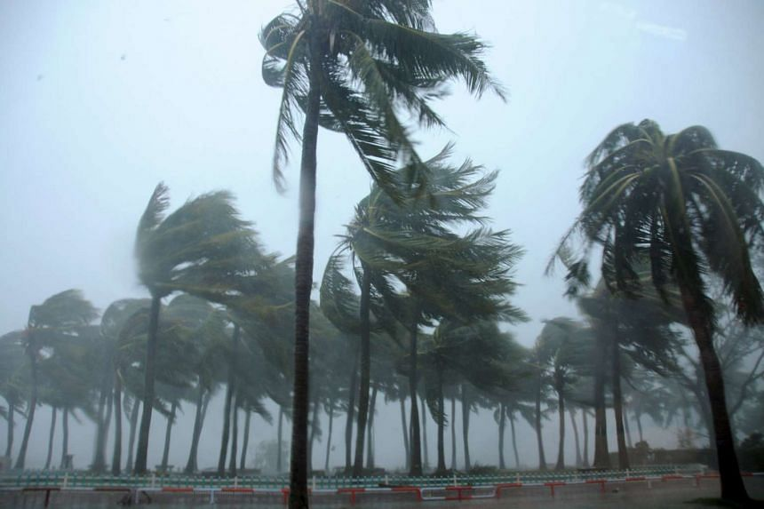 Trees are blown by Typhoon Mujigae on a street in Zhanjiang, Guangdong province on Sunday.