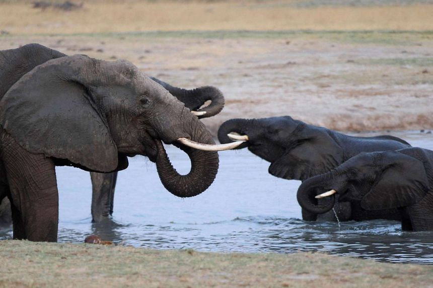 A herd of elephants gather at a watering hole in Hwange National Park in Zimbabwe on Oct 14, 2015.