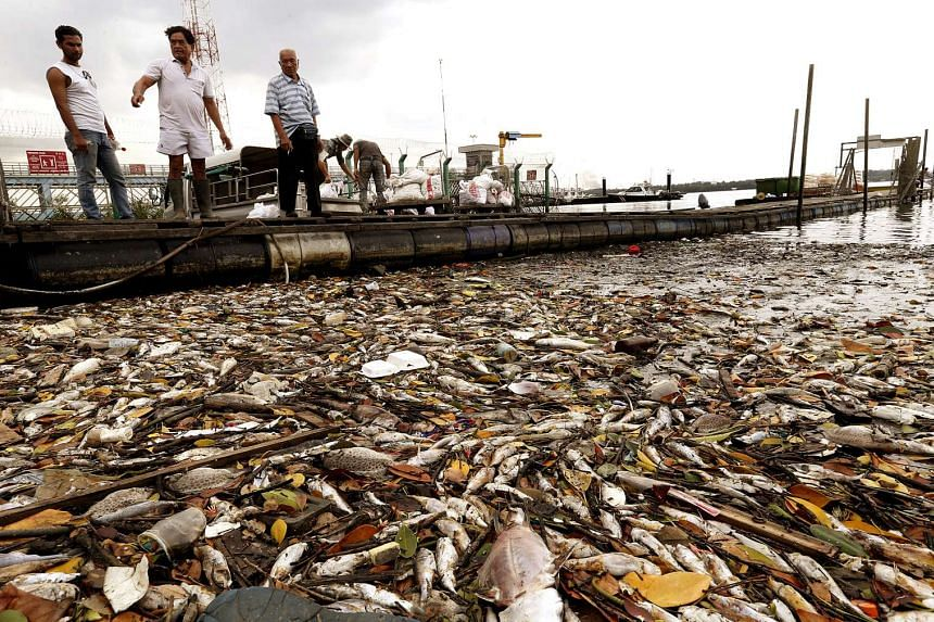 Hundreds of dead fish, caused by a wave of plankton bloom, wash up along the shores at Lim Chu Kang jetty on March 7, 2015.