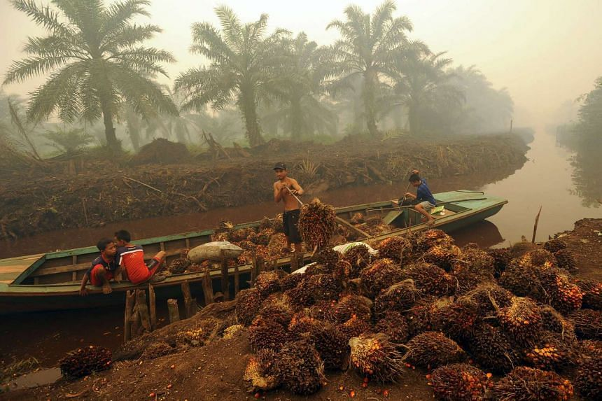 A worker unloads palm fruit at a palm oil plantation in Peat Jaya, Jambi province on the Indonesian island of Sumatra Sept 15, 2015.