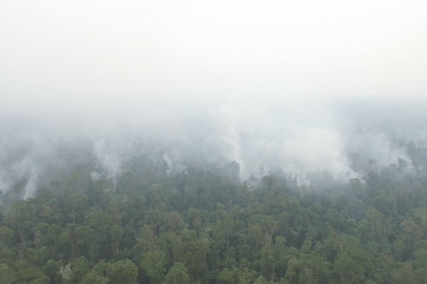 The drone footage filmed by Greenpeace showed acrid haze rising from dense jungle, trees reduced to fire-blackened skeletons, vast swathes of burnt peatland, and a city shrouded in haze on the Indonesian part of Borneo.