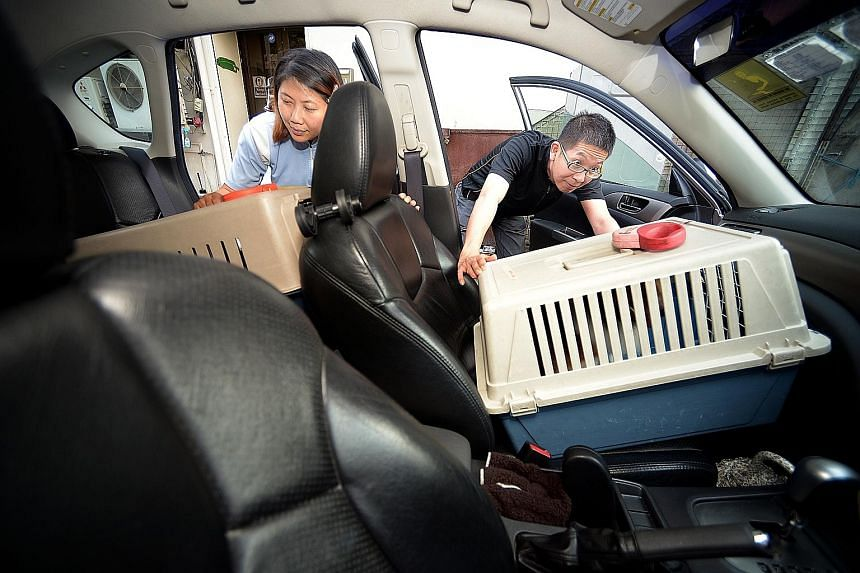 Pet grooming service managing director Sharon Low passing two pets to PetMate driver Sydney Fong Kah Woh for their trip home.
