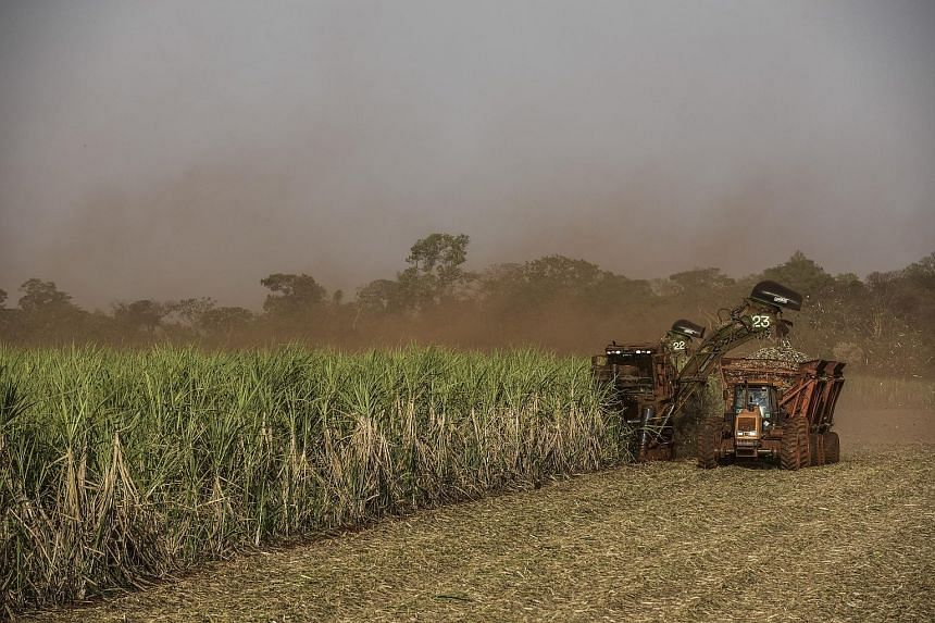 A sugar cane farm in Brazil. Production yields for many crops worldwide could be hit by El Nino-linked weather patterns, thus hastening a rebound in prices for commodities such as sugar and palm oil. Even so, operating conditions for agri-businesses