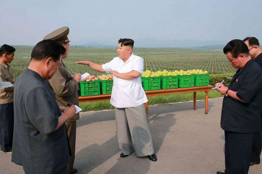 North Korean leader Kim Jong Un at the Taedonggang Combined Fruit Farm in Pyongyang on Aug 19, 2015.