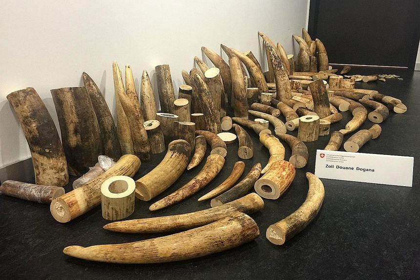 The illegal ivory trade is particularly serious in Tanzania, whose elephant population has declined from 110,000 in 2009 to a little over 43,000 last year.