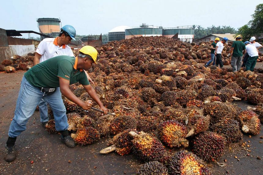 Workers inspect the quality of harvested oil palm fruit outside the processing mill at the Bell Eco Power Sdn. palm oil operations in Batu Pahat, Johor, Malaysia, on Mar 3, 2014.