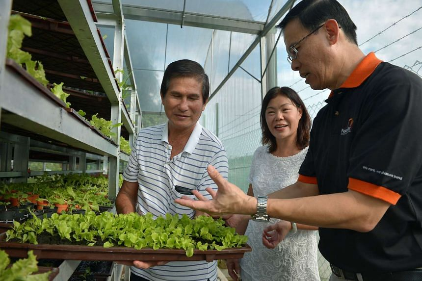 Dr Teo Ho Pin (right) with Pocket Greens co-founder Eng Ting Ting and retired cleaner Thor Tiak Soon at the vertical farm in Bukit Panjang on Dec 3, 2014.