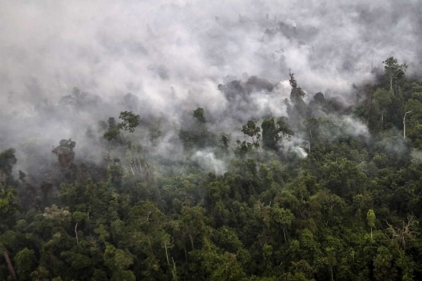 A forest fire is seen from a helicopter operated by the National Agency for Disaster Management over Langgam District in Riau, Sumatra, in this Sept 23, 2015, file photo taken by Antara Foto.