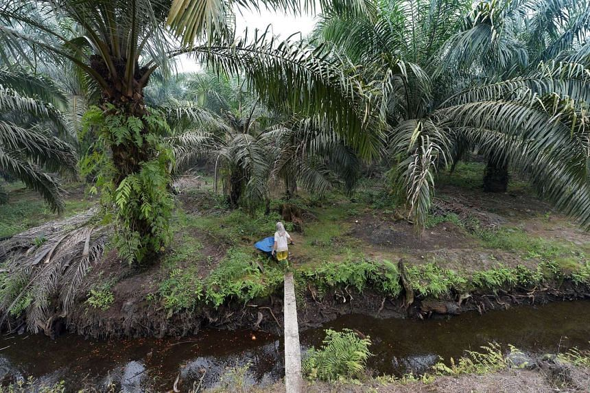 A girl pushes a cart through a palm oil plantation area in Pelalawan, Riau province on Sept 16, 2015.