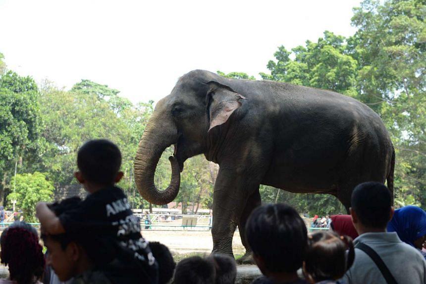 Visitors looking at a Sumatran elephant in its enclosure at Ragunan zoo in Jakarta on July 21, 2015.