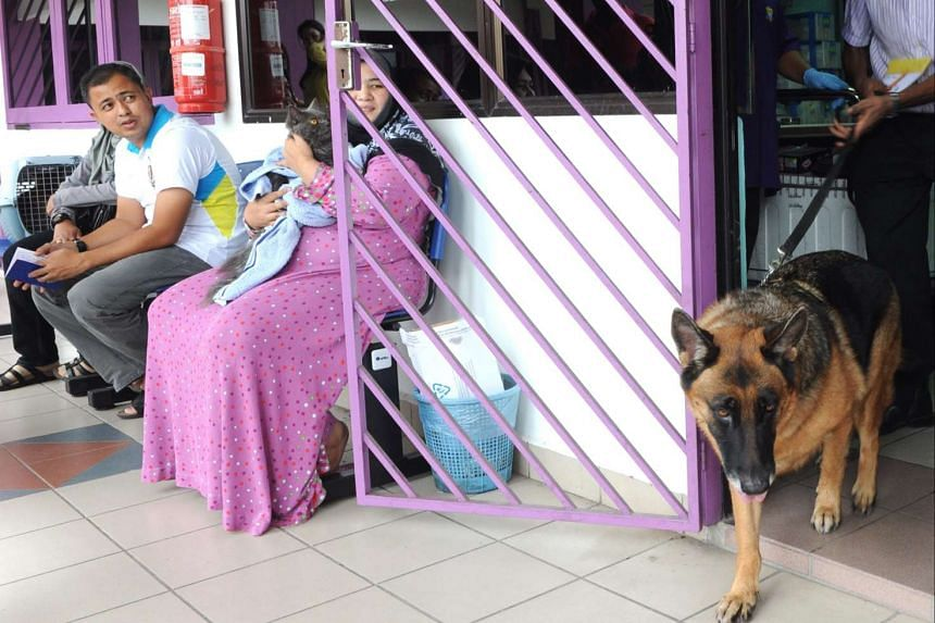 A dog leaving the Penang Veterinary Department in Butterworth, Penang, after receiving an anti-rabies jab.